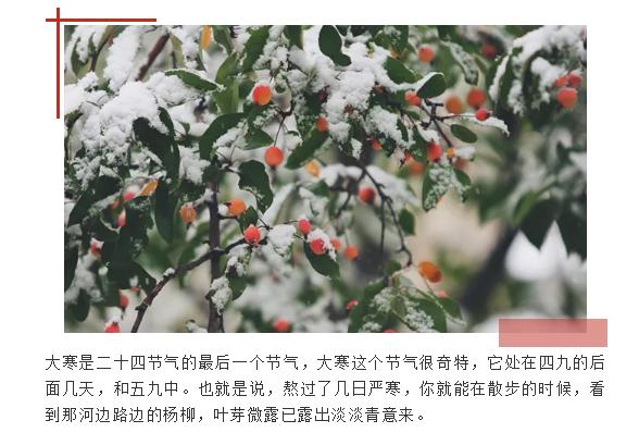 大寒是二十四节气的最后一个节气,大寒这个节气很奇特,它处在四九的后面几天,和五九中。也就是说,熬过了几日严寒,你就能在散步的时候,看到那河边路边的杨柳,叶芽微露已露出淡淡青意来。